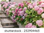 spring hydrangea   Shutterstock . vector #252904465