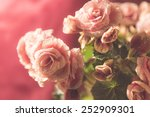 pink begonia with water drops | Shutterstock . vector #252909301