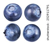 Blueberries Isolated