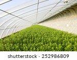 beautiful greenhouses  | Shutterstock . vector #252986809