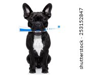 French Bulldog Dog Holding Electric - Fine Art prints