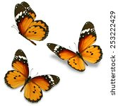 Three Orange Butterfly Isolate...