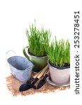 grass in pots and garden tools... | Shutterstock . vector #253278451