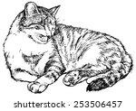 Cat  Drawn Vector Illustration...