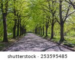 Green Alley With Trees In The...