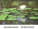white water lily   Shutterstock . vector #253624165