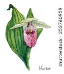 Vector Orchid Watercolor...