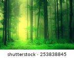 fantasy yellow green forest... | Shutterstock . vector #253838845