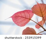 Small photo of Cordate leaf or heart shaped leaf, symbol of Buddhist religion