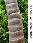 Close Up Photo Of Palm Tree Bark
