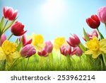 Spring Daffodil And Tulips In...