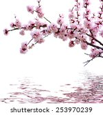 Branch With Pink Blossoms...
