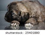 portrait of sweet 1 5 month old ...   Shutterstock . vector #25401880