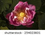 center of pink lotus on top view | Shutterstock . vector #254023831