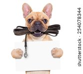 Stock photo fawn french bulldog with leather leash ready for a walk with owner holding a blank banner or 254078344