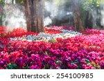Flower Garden  Cyclamen Flowers
