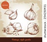 vector hand drawn garlic set....   Shutterstock .eps vector #254250931