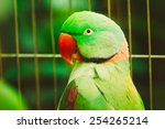 close up of alexandrine... | Shutterstock . vector #254265214