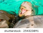 dolphins  looking right to the... | Shutterstock . vector #254323891