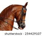 beautiful brown arabian horse... | Shutterstock . vector #254429107