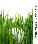 Golf Ball In Tall Grass