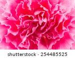 Close Up Pink Flower Background