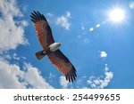 brahminy kite showing wing... | Shutterstock . vector #254499655