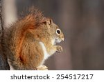 squirrel resting in nature | Shutterstock . vector #254517217