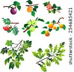 Branches And Fruits