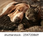 Cat Pillow  Dog Blanket
