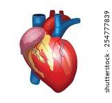 vector heart illustration | Shutterstock .eps vector #254777839