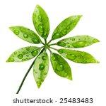 Water Drops On Fresh Green...