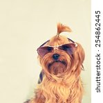 yorkshire terrier portrait in... | Shutterstock . vector #254862445