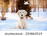 winter walk at snowing park of... | Shutterstock . vector #254863519