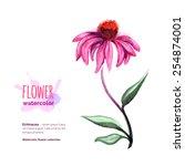 Echinacea Purpurea  Officinal...
