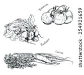 hand drawn vegetables ink... | Shutterstock .eps vector #254921659