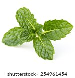 Fresh Mint Herb Leaves Isolate...