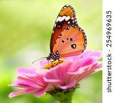Closeup Butterflys On Flower ...