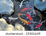 Colorful Koi Fish In Pond