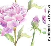 peonies. vector illustration... | Shutterstock .eps vector #255095701
