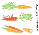 carrots are set to generalize ... | Shutterstock .eps vector #255120745