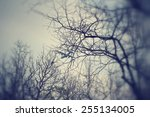 blurred forest   black and white | Shutterstock . vector #255134005