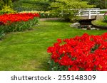 Grass Lawn With With Red Tulip...