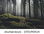 wilderness landscape forest... | Shutterstock . vector #255190414