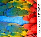 beautiful bird feathers ... | Shutterstock . vector #255210595
