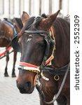 horse | Shutterstock . vector #2552309