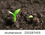 small green seedling in the... | Shutterstock . vector #255287455