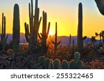 Fifth Sunset At Saguaro...