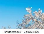 Snow On Tree Landscape In Winter