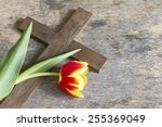 spring tulip and cross abstract ... | Shutterstock . vector #255369049